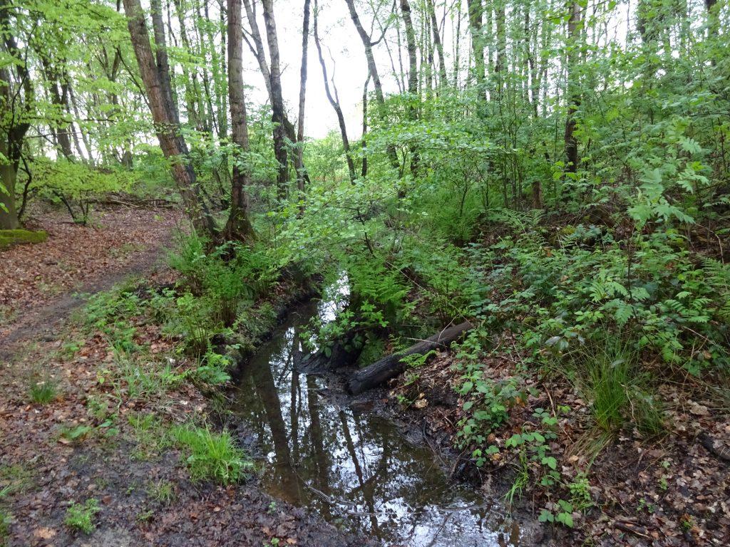 Een foto van een met bruine bladeren bedekt bospad in een loofbos met naast het pad een kabbelend beekje.