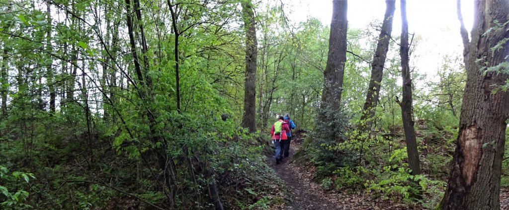 Twee cursisten van Northern Pioneers lopen over een bospad door de groene bossen in Twente.