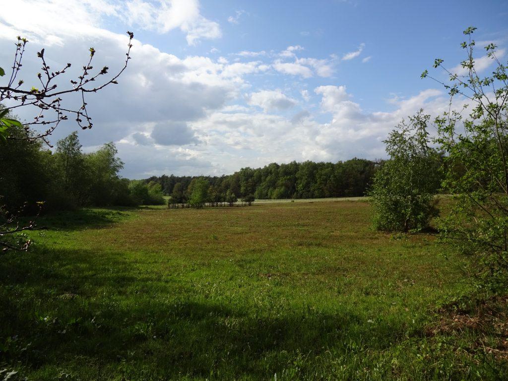Een wijds uitzicht over groene velden richting groene loofbomen met een helder blauw bewolkte lucht.