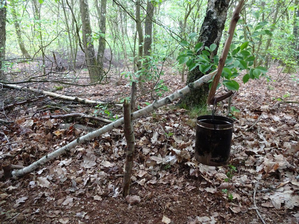 In een groen loofbos hangt een billycan aan een zelf gesneden houden haak.