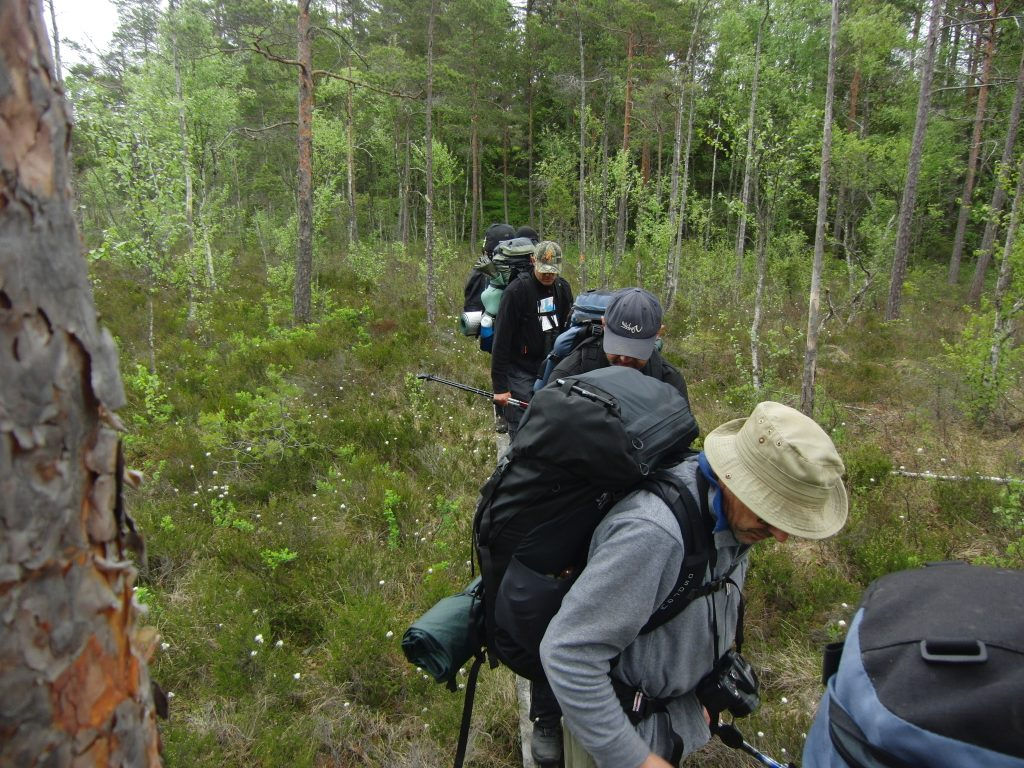 Cursisten lopen met rugzak op achter elkaar door de groene dicht beboste bossen van Zweden.