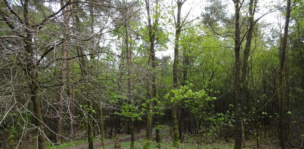 Foto in het bos genomen van groene loofbomen en een zandpad met een grijzige lucht op de Sallandse Heuvelrug.