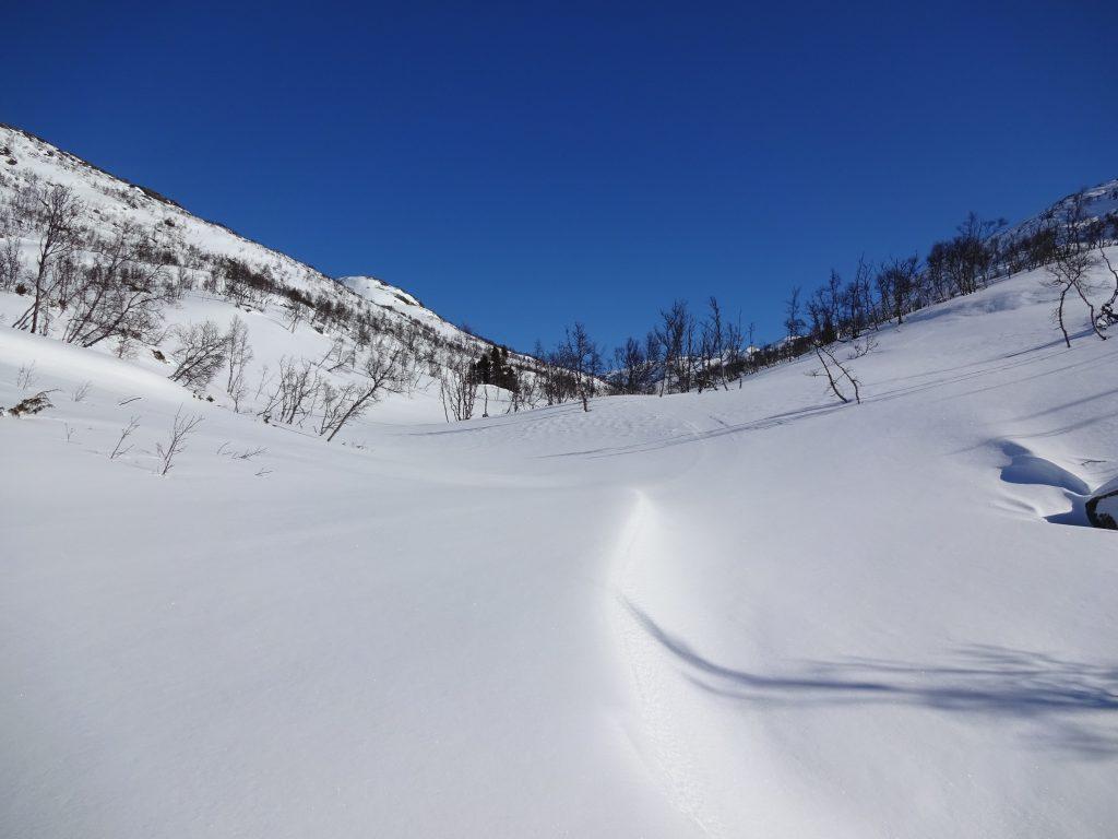 Een wit besneeuwd dal met enkele dennenbomen en een stralend blauwe lucht in Noorwegen.