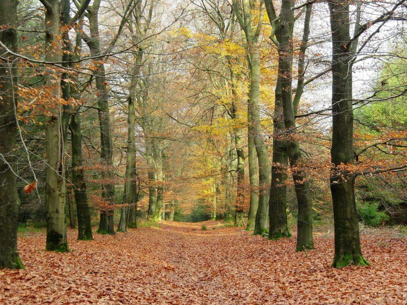 Trekking op de Sallandse Heuvelrug door een beukenbos in de herfst.
