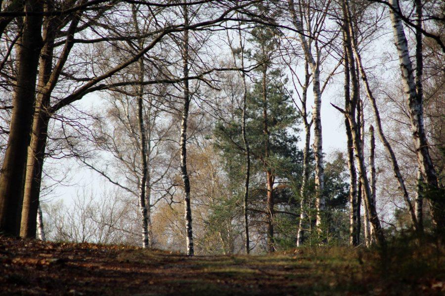Een heuvel op wandelen in het bos van de Sallandse Heuvelrug.