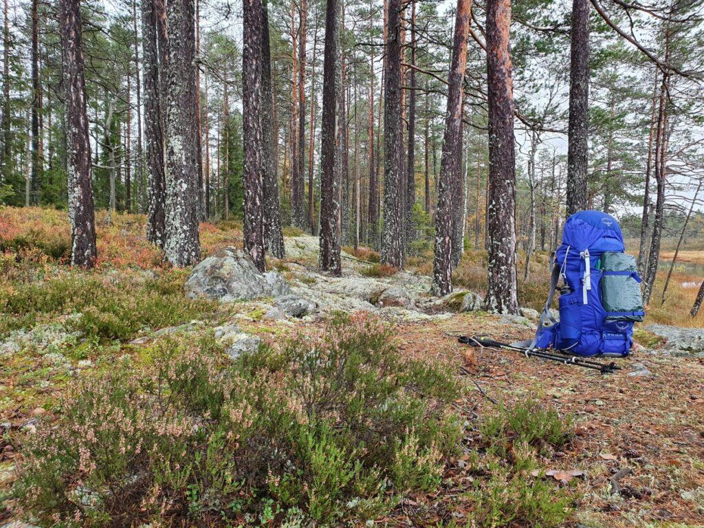 Blauwe rugzak in de bossen van Zweden tijdens solotrekking