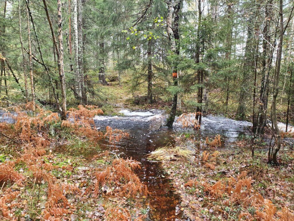 Tijdens de solotrekking in Zweden is er een vennetje ontstaan in het bos door regenval