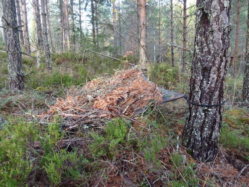 Noodshelter maken met doek en natuurlijke materialen in het bos in Zweden