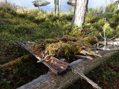 Shelter bouwen van natuurlijke materialen in Zweden