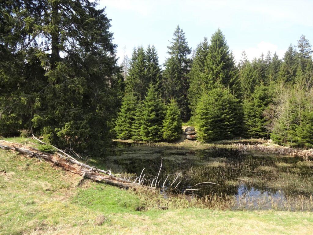 Trekking door groen veld met water en uitzicht op dennenbos in de Harz Duitsland