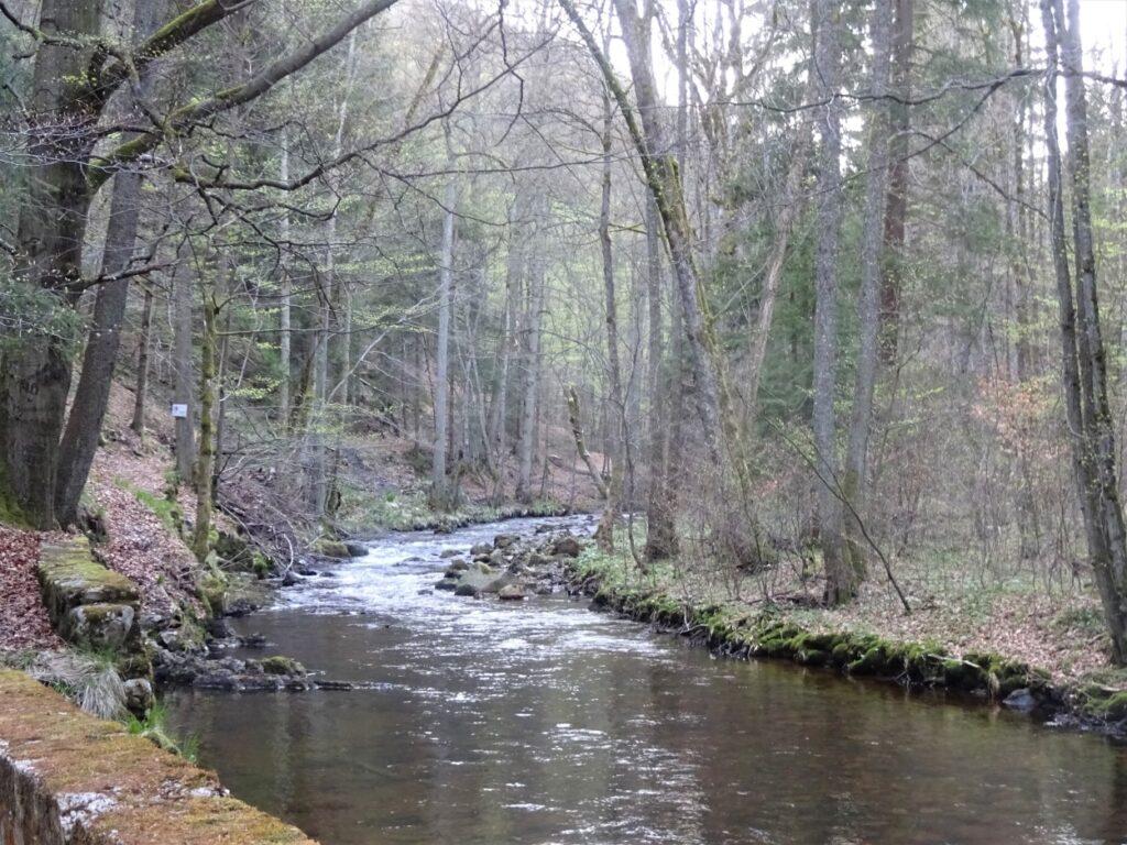 Een trekking langs rivier in de herfst door de bossen in de Harz Duitsland