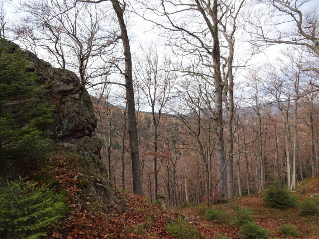 Herfst wandeling in de bossen langs rotsen in de Harz Duitsland