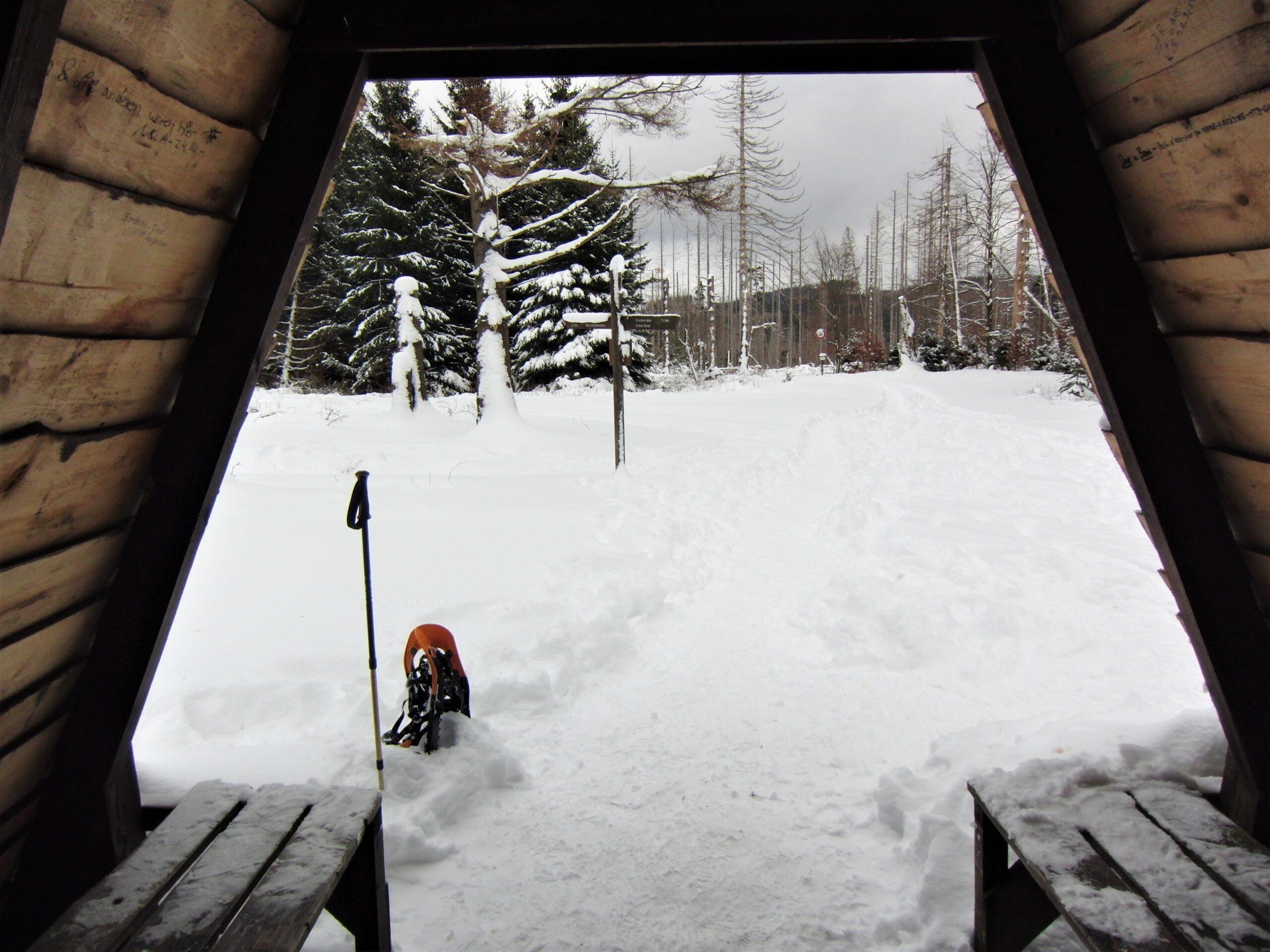 uitzicht op besneeuwd bos en sneeuwschoenen vanuit hutje